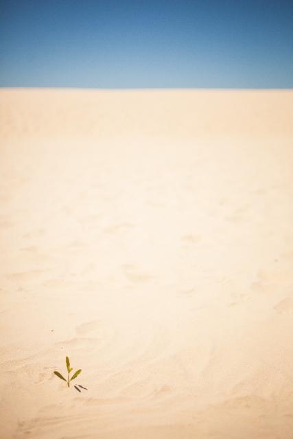あてのない砂漠